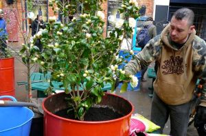 New tree in Neal's Yard