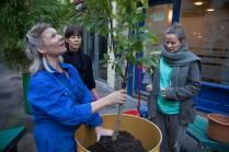 nealsyardtreeplanting3